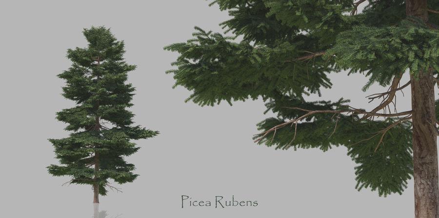 Pacote realista de árvores coníferas royalty-free 3d model - Preview no. 5
