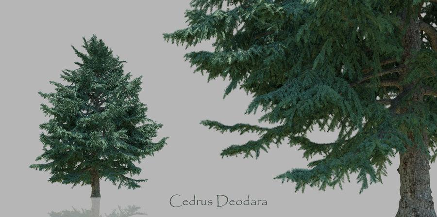 Pacote realista de árvores coníferas royalty-free 3d model - Preview no. 2