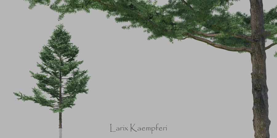 Pacote realista de árvores coníferas royalty-free 3d model - Preview no. 3