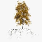 Birch Autumn 2 3d model