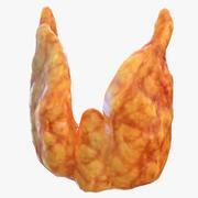 Mänsklig sköldkörtel 3d model