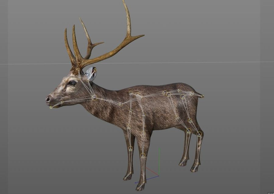 Smbar Geyik Rusa unicolor Arma royalty-free 3d model - Preview no. 13