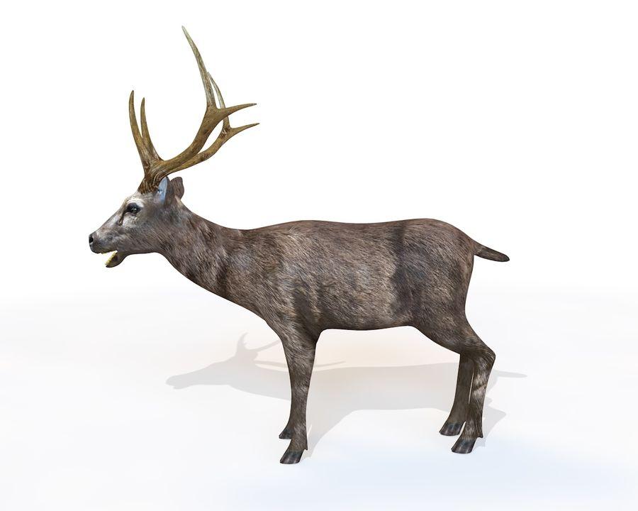 Smbar Geyik Rusa unicolor Arma royalty-free 3d model - Preview no. 3