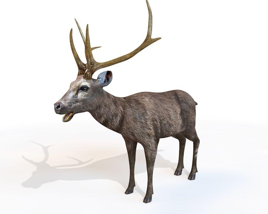 Smbar Geyik Rusa unicolor Arma royalty-free 3d model - Preview no. 1