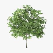 3メートルロックエルムツリー 3d model