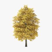 7メートルのオータムロックエルムツリー 3d model