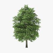 7メートルロックエルムツリー 3d model