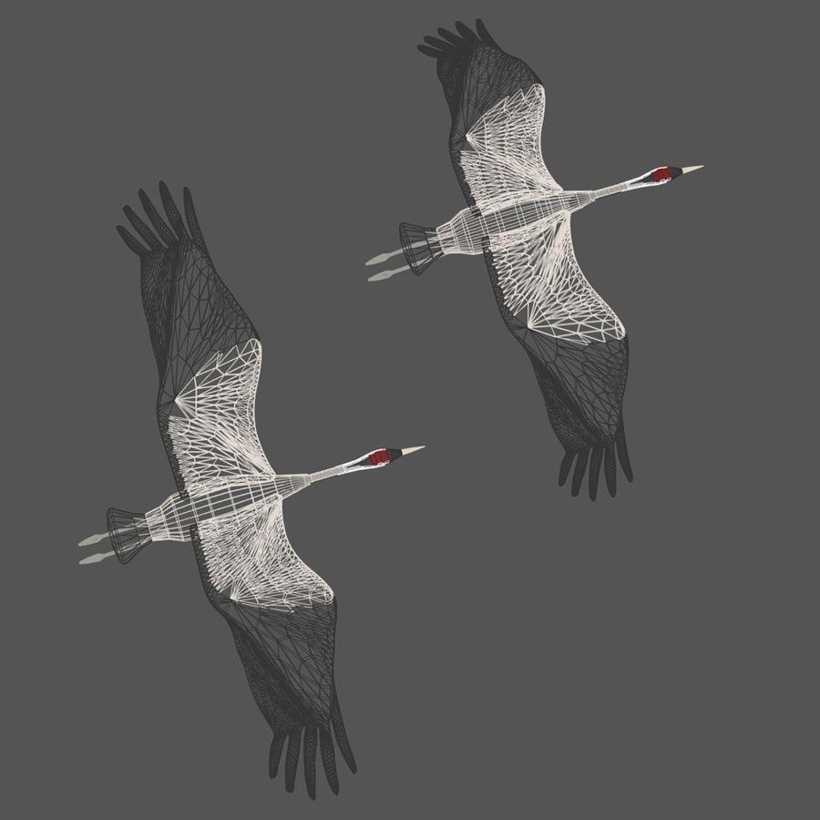 Crane birds royalty-free 3d model - Preview no. 6