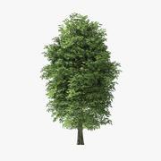 13メートルロックエルムツリー 3d model
