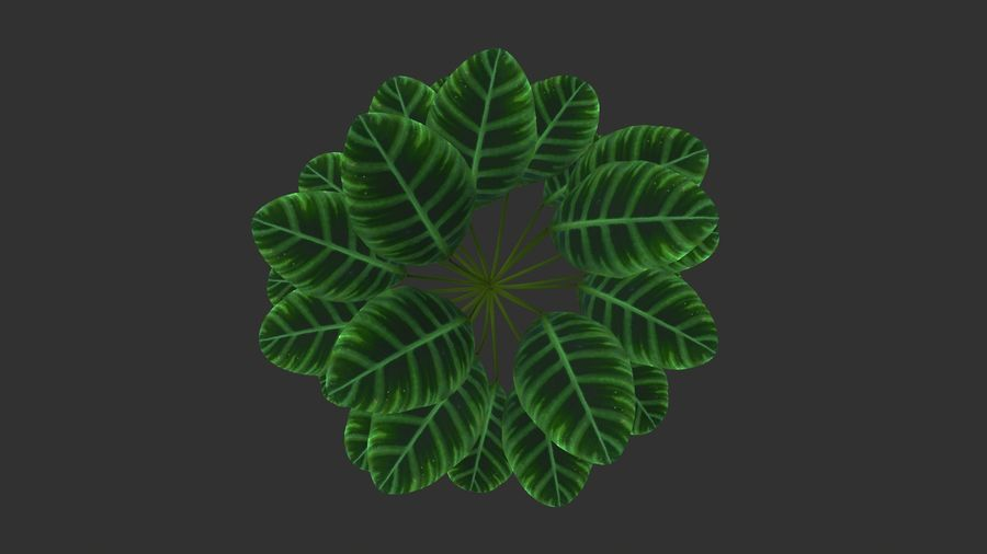 TREE-001 Plant royalty-free 3d model - Preview no. 5