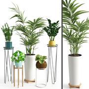 室内植物39 3d model