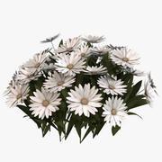 Daisy Flowers 3d model