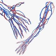 Układ sercowo-naczyniowy ludzkiego ramienia 3d model