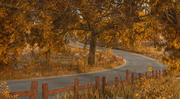 Autumn Road Forest 3d model