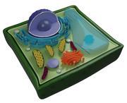 식물 세포 3d model