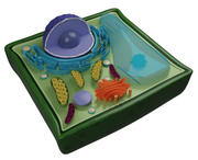 PLANT CELL 3d model