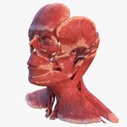 人头肌肉系统 3d model
