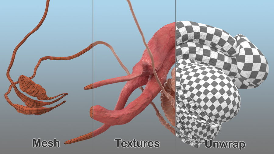 Système reproductif masculin royalty-free 3d model - Preview no. 6