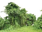 Forest Jungle Achtergrond 3d model
