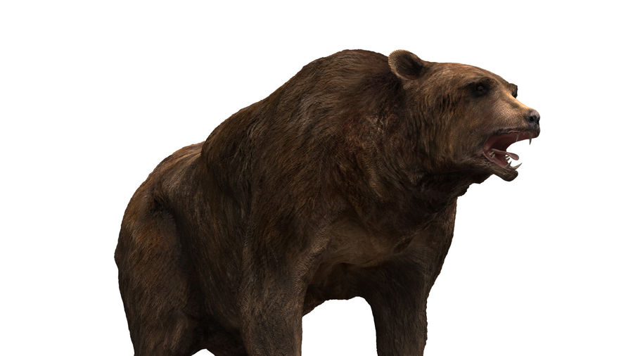 Bear No Fur royalty-free 3d model - Preview no. 6