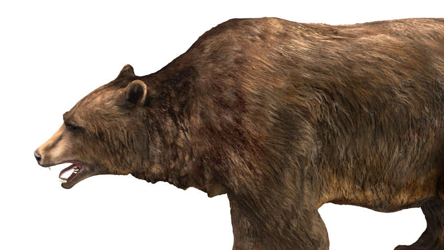Bear No Fur royalty-free 3d model - Preview no. 12