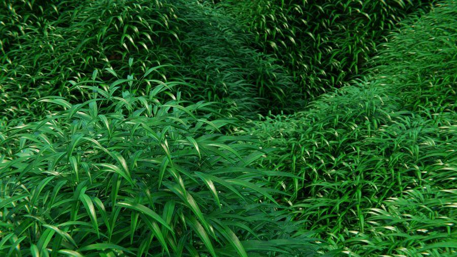 campo de hierba royalty-free modelo 3d - Preview no. 5