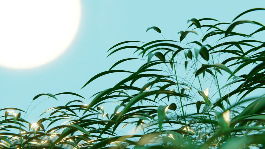 campo de hierba royalty-free modelo 3d - Preview no. 7