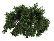 숲 나무 3d model