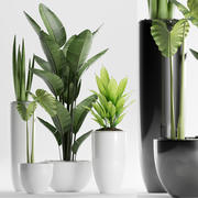 rośliny 199 3d model