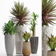 식물 206 3d model