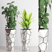 rośliny 210 3d model