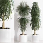 rośliny 212 3d model