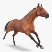 Running Bay Horse Fur 3d model