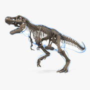 Tyrannosaurus Rex Skeleton Fossil with Skin Rigged 3d model
