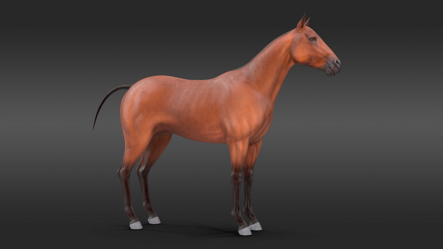 Bay Horse royalty-free 3d model - Preview no. 2