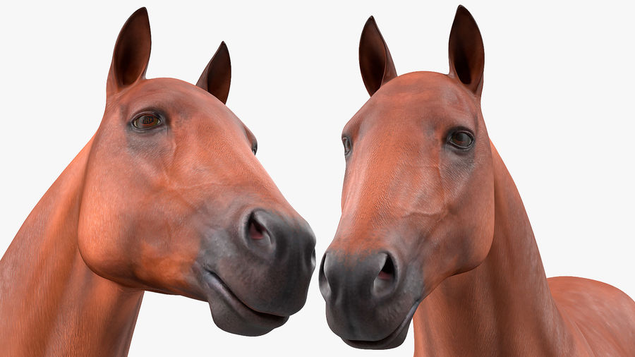 Bay Horse royalty-free 3d model - Preview no. 16