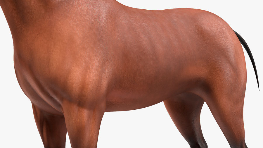 Bay Horse royalty-free 3d model - Preview no. 13