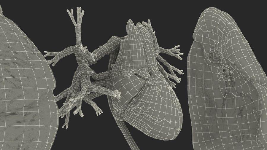 Manliga interna organ royalty-free 3d model - Preview no. 46