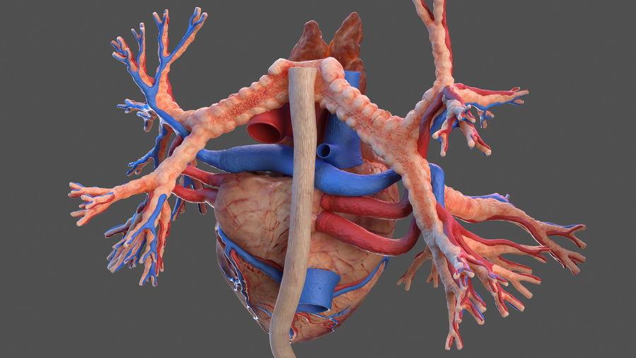 Manliga interna organ royalty-free 3d model - Preview no. 18