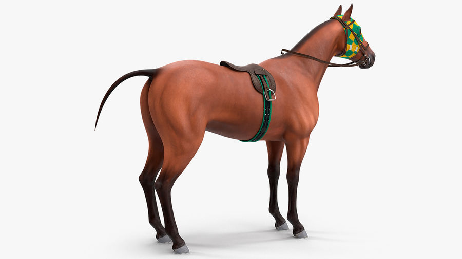 Bay Racehorse royalty-free 3d model - Preview no. 5