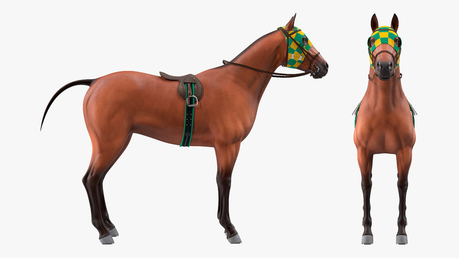 Bay Racehorse royalty-free 3d model - Preview no. 7