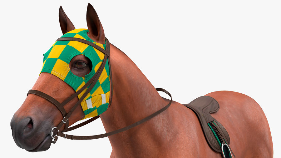 Bay Racehorse royalty-free 3d model - Preview no. 11