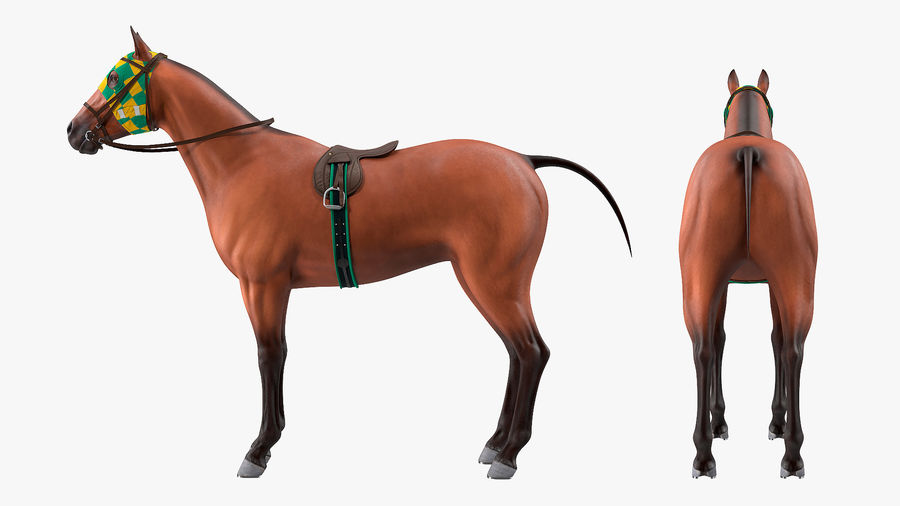 Bay Racehorse royalty-free 3d model - Preview no. 8