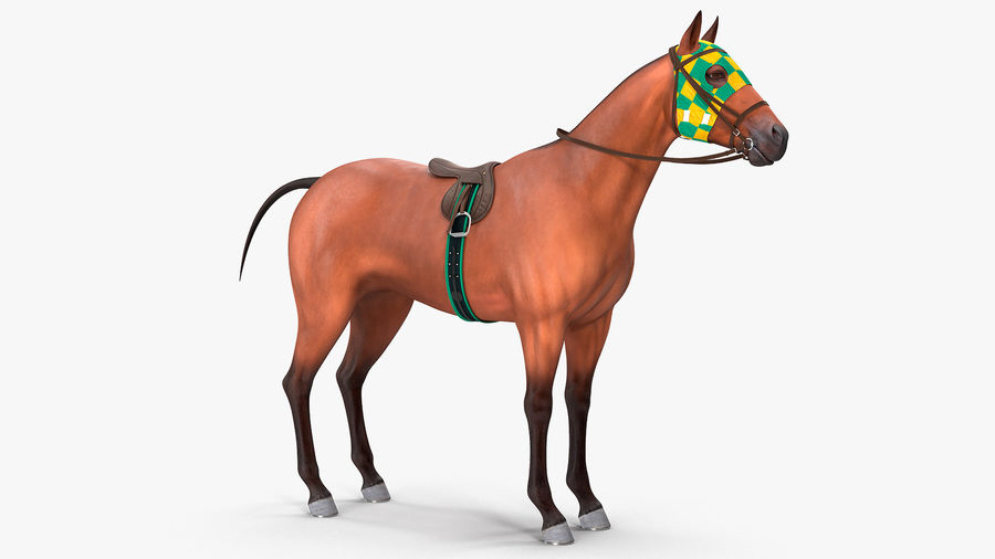Bay Racehorse royalty-free 3d model - Preview no. 4