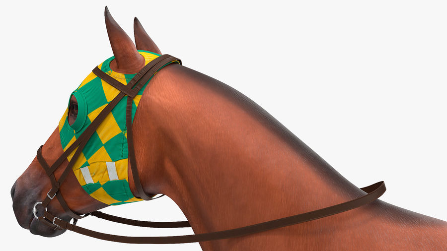 Bay Racehorse royalty-free 3d model - Preview no. 18