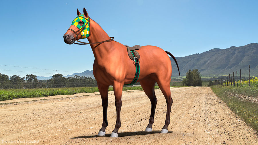 Bay Racehorse royalty-free 3d model - Preview no. 3