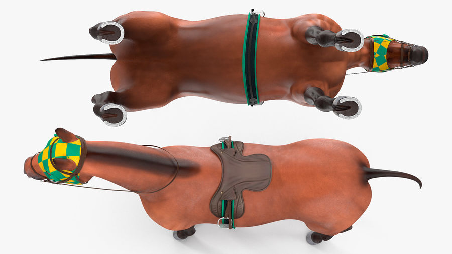Bay Racehorse royalty-free 3d model - Preview no. 9