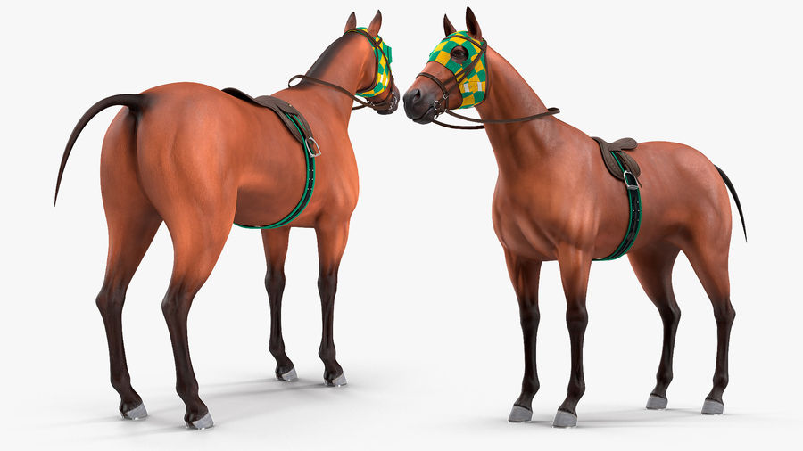 Bay Racehorse royalty-free 3d model - Preview no. 6