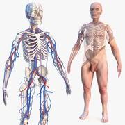 男性骨骼心血管系统和皮肤 3d model