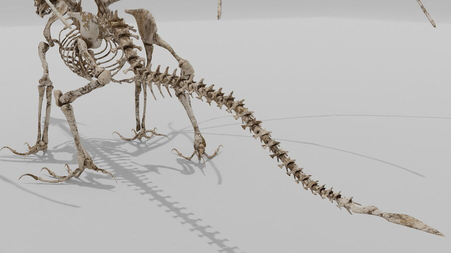 Bone Dragon royalty-free 3d model - Preview no. 6